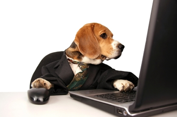 [Image: dog_computer_photo.37212421.jpg]